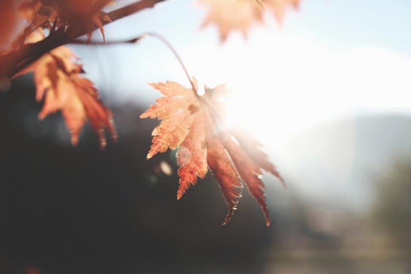 Το φθινόπωρο είναι μαγικό!