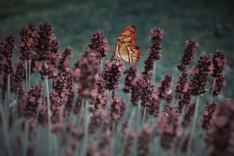 Χωρίς προϋπηρεσία κάμπιας πεταλούδα δε γίνεσαι