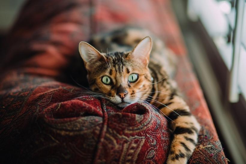Η γάτα μας είναι το ψυχοφάρμακό μας