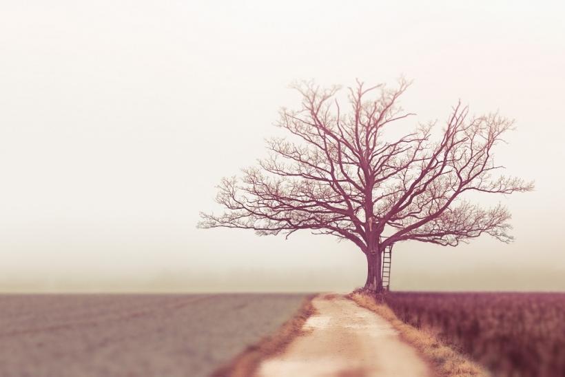 Έχεις ψάξει το γενεαλογικό σου δέντρο;