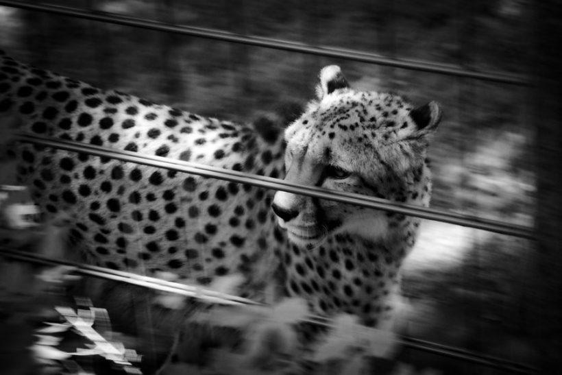 Ζωολογικά πάρκα∙ ή αλλιώς φυλακές αθώων