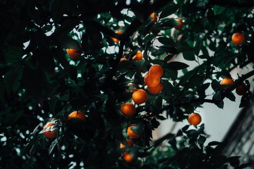 Τα δέντρα που έχουν καρπούς πετροβολούν