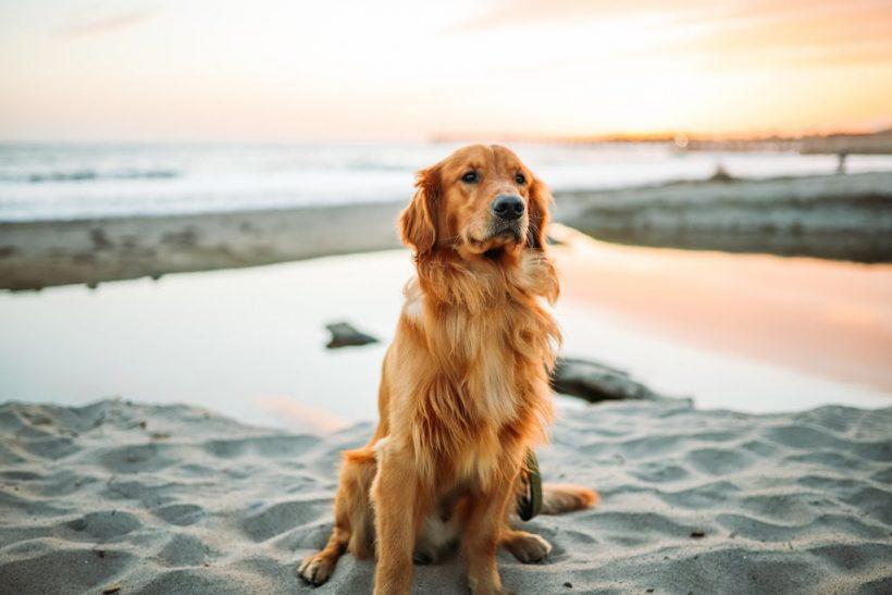 «Το σκυλάκι σας και σ' άλλη παραλία»∙ χμ, όχι!