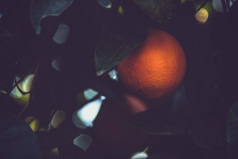 Το πορτοκάλι που δεν έπεφτε αν δεν ήταν βέβαιο πως θα το μαζέψουν