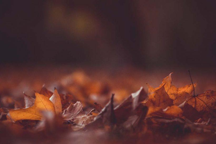 Το φθινόπωρο σε βάζει σε πρόγραμμα