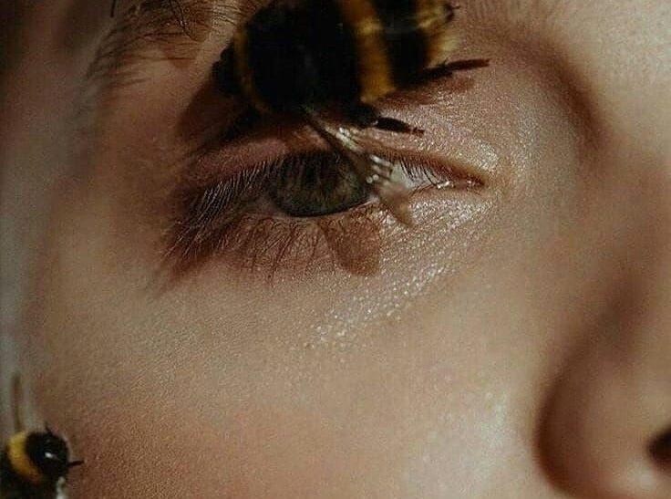 Άγριες μέλισσες· το πιο όμορφο μυστικό της φύσης