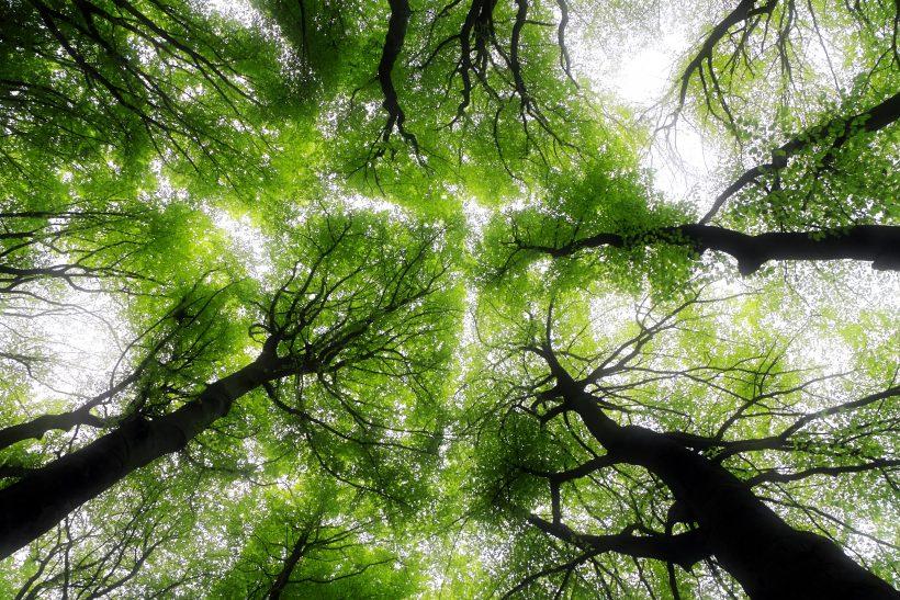 «Η ηθική μας ξεκινά απ' τη στάση μας απέναντι στη φύση»
