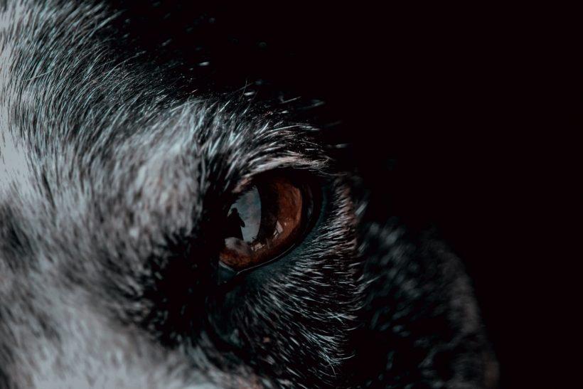 Σ' έναν κόσμο προβάτων είναι τύχη να γεννηθείς λύκος