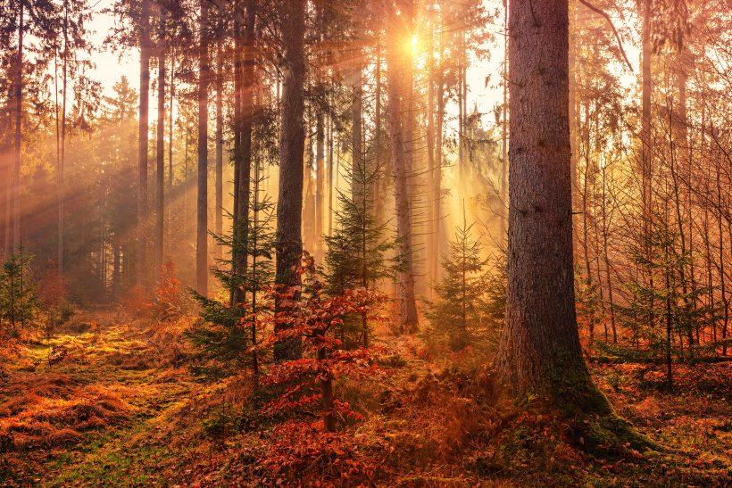 Η φύση μιλάει σ' αυτούς που την ακούν!
