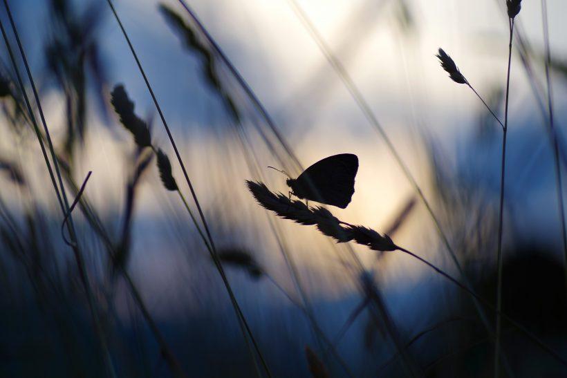 Το φαινόμενο της πεταλούδας