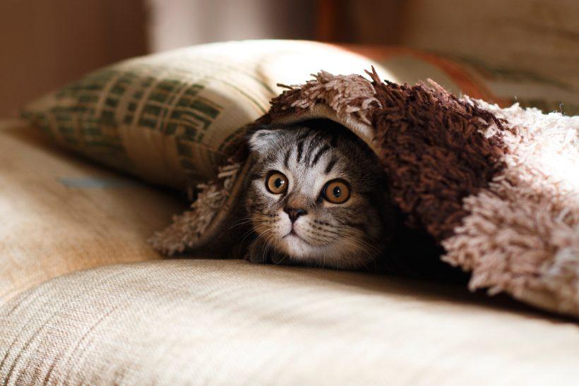 10 χαρακτηριστικά των ανθρώπων που έχουν γάτα