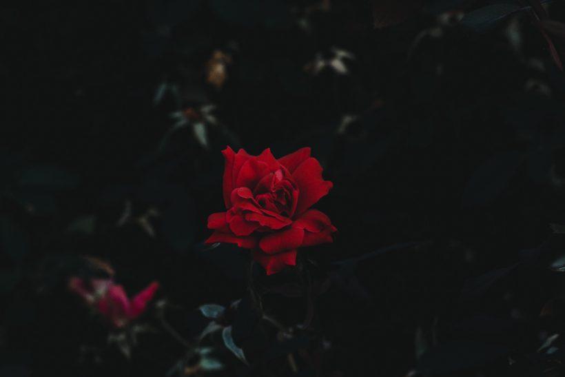Γκοθάδες εκ πεποιθήσεως· παρεξηγημένοι και σκοτεινά ρομαντικοί