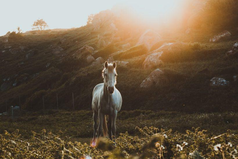 Σύνδρομο Σταχτοπούτας και Λευκού Ιππότη· η ζωή σου στα χέρια άλλων