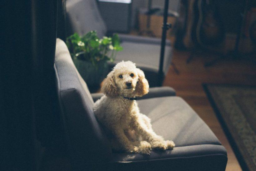 Αν δεν τα πεις στο σκύλο σου τότε σε ποιον;