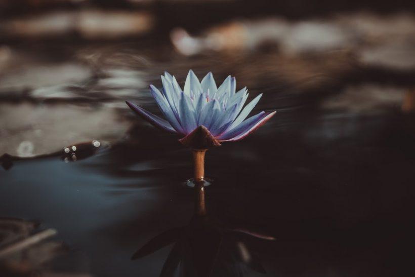 38 ανθοϊάματα Μπαχ· θεραπεία με το άρωμα των λουλουδιών