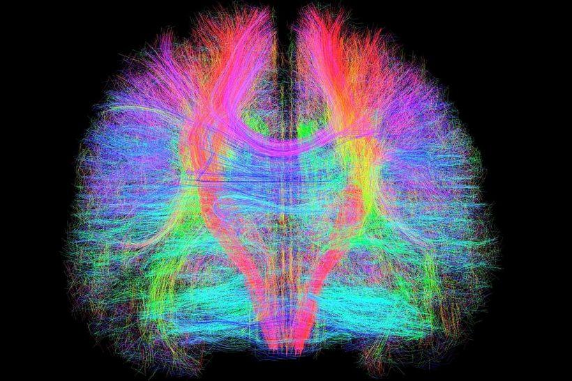 Ανθρώπινος εγκέφαλος· αυτό το άλυτο μυστήριο