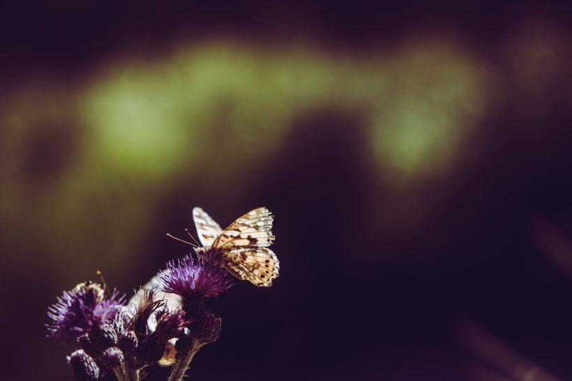 Οι πεταλούδες στο στομάχι είναι πάντα διαφορετικές