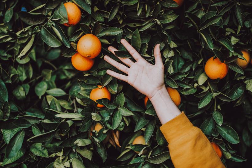 Όταν το φιλαράκι ψάχνει κι αλλού πορτοκαλιές