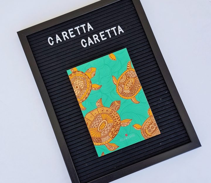 Notebook | Caretta Caretta