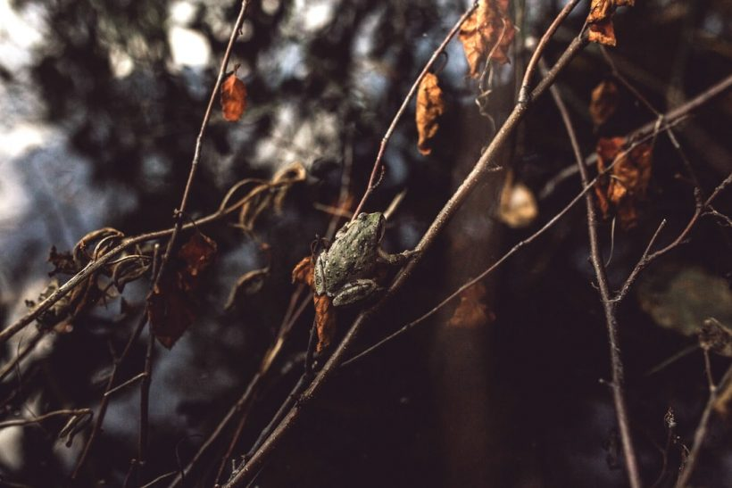 Σύνδρομο του βραστού βατράχου: προσαρμογή μέχρι τέλους ή διαφυγή;
