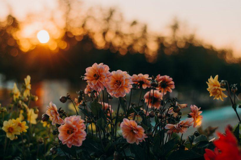 Η φύση έχει έναν δικό της τρόπο να μας μαθαίνει την αγάπη
