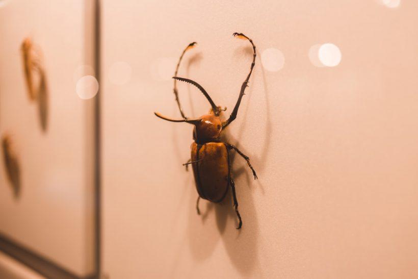 Η θεωρία της κατσαρίδας κι άλλα παράδοξα της ζωής