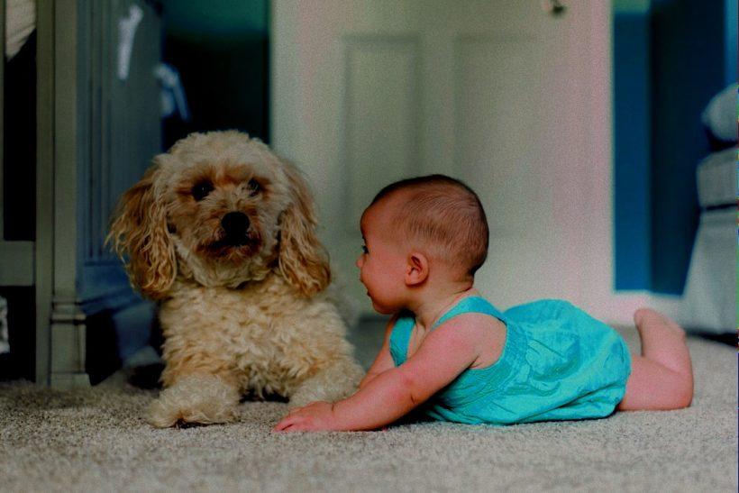 10 βήματα για να γνωρίσεις στο νεογέννητο παιδί σου το σκυλί σου