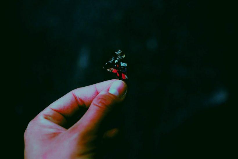 Το φαινόμενο της πεταλούδας βρίσκει εφαρμογή στον έρωτα