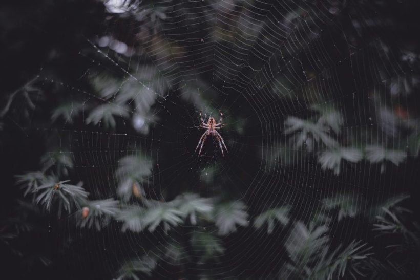 Ταραντέλα: Μια αράχνη, ένας χορός κι ο μύθος που τα συνδέει