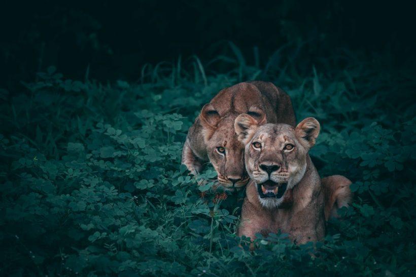 Φίλοι-ήρεμες δυνάμες που αν τούς χρειαστείς γίνονται λιοντάρια