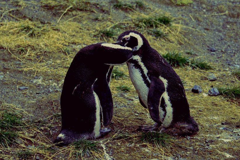 Tο ζωικό βασίλειο μάς μαθαίνει πως το φλερτ είναι ένστικτο