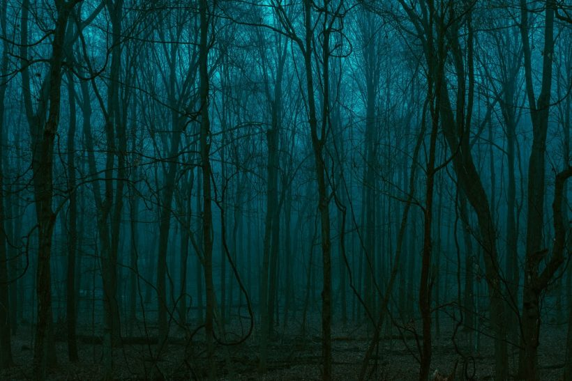 Ένα δάσος που διαλέγουν για να τερματίσουν τη ζωή τους