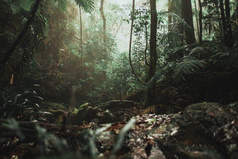 Στον Αμαζόνιο θα βρεις μια εκδοχή σου που πάντα έψαχνες