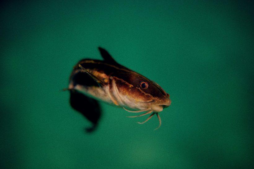 Ποια στοιχεία φανερώνουν ένα προφίλ catfish;