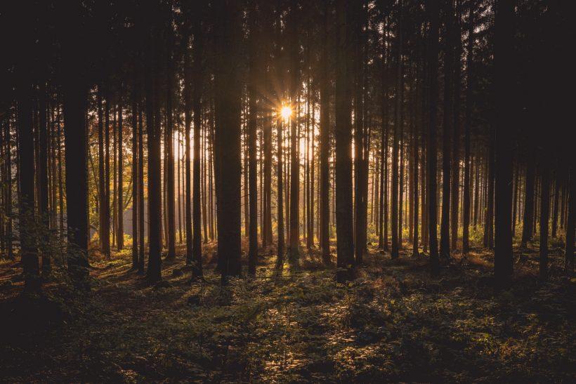 Πώς μπορούν οι ήχοι της φύσης να σε καλμάρουν;